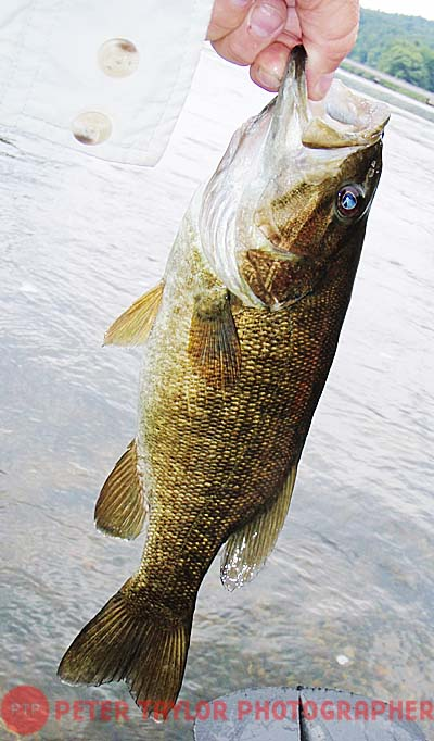 Smallmouth.1